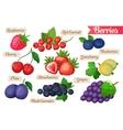 set juicy berries vector image