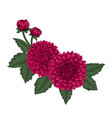 beautiful bouquet dahlias with the effect of a vector image vector image