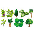 set variety plants and trees vector image