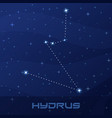 constellation hydrus water snake vector image vector image