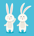 cute rabbits couple characters vector image