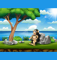 happy chimpanzee mother with her bain park vector image vector image