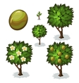 Planting and cultivation of olive vector image vector image