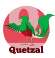 ABC Cartoon Quetzal vector image vector image
