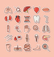 human body anatomy organs health lungs liver tooth vector image vector image