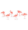 set of exotic flamingos isolated on white vector image
