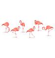 set of exotic flamingos isolated on white vector image