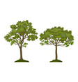 trees pine and maple vector image vector image