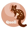 ABC Cartoon Quoll vector image vector image