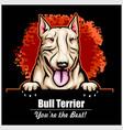 bull terrier - peeking dogs - breed face head vector image vector image