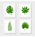 picture frame with palms leaves isolated vector image vector image