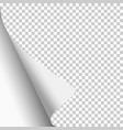 transparent paper sheet with curled corner vector image vector image
