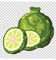 Bergamot Isolated vector image vector image