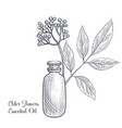 drawing elder flowers essential oil vector image vector image
