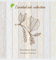 pure essential oil collection five-flavor berry vector image vector image