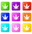 cannabis leaf set 9 vector image vector image