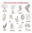 collection of herbs for alzheimer disease vector image