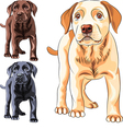 Cute puppy dog breed Labrador Retriever vector image vector image