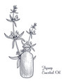 drawing hyssop essential oil vector image vector image