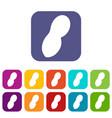 peanut icons set flat vector image vector image