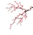 Cherry blossom branch EPS 10 vector image