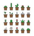 set floral plants and blooming cactus in pots vector image