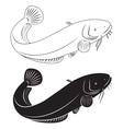 catfish vector image vector image