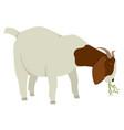 farming set a boer goat eating hay vector image vector image