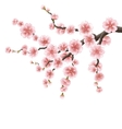 Spreading branch of pink cherry blossom EPS 10 vector image vector image