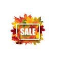 fall leaves sale sign autumn leaf frame nature vector image