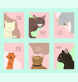 cats show cards grooming or veterinary feline vector image vector image