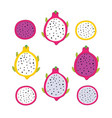 exotic tropical fruits dragon fruit pitaya vector image
