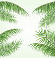 2d realistic palm leaves on white background vector image