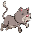 A gray cat vector image vector image
