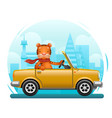 cute tiger riding on car flat design cartoon vector image