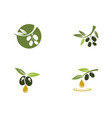 olive logo template icon vector image vector image
