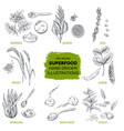 superfood hand drawn sketch vector image vector image