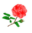 twig pink rose and bud vintage vector image vector image