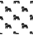 Bear icon in black style isolated on white vector image