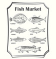 hand sketched different fish poster vector image vector image