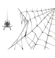 Large black spider and web on white background vector image vector image