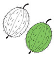 set gooseberries drawn in black lines and vector image vector image