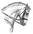 andalusian horse hand drawing vector image vector image