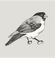 graphic bullfinch hand drawn bird on retro vector image vector image