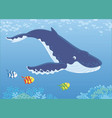 hump-backed whale diving vector image vector image