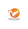 squirrel logo and symbols vector image