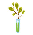test tube with sprout cartoon vector image vector image