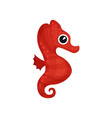 bright red sea horse small sea fish with curled vector image