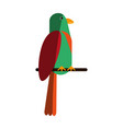 exotic natural bird vector image vector image