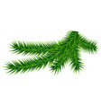 green fir branch isolated on white vector image vector image